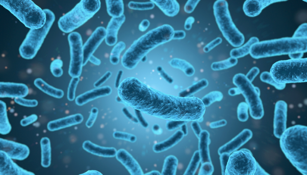 121-201847-contradictory-immune-responses-listeria-bacteria_700x400